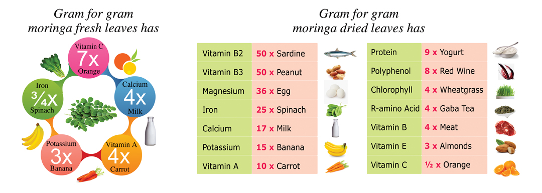 moringa nutrition value